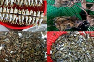 La liệt đặc sản rừng: Chuột, nòng nọc, ấu trùng... ở chợ vùng cao