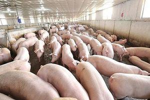 Ngăn chặn đại dịch, Việt Nam tạm ngưng nhập khẩu thịt heo từ Ba Lan và Hungary