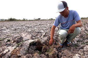 Ninh Thuận: Người dân 'oằn mình' chống chọi với khô hạn