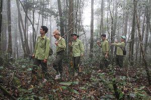 Nổ súng ở khu vực rừng Vườn quốc gia Chư Yang Sin, 1 kiểm lâm bị thương