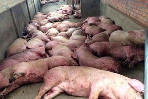 Tạm dừng nhập khẩu thịt lợn từ Hunggary và Ba Lan từ 20/9
