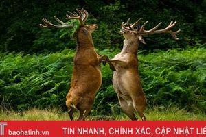 Ấn tượng những khoảnh khắc hài hước của các loài động vật