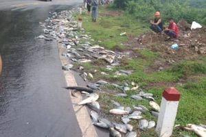 Clip: Cận cảnh cá bơi như suối giữa quốc lộ sau khi xe tải gặp tai nạn ở Hòa Bình