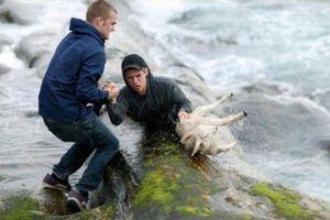 Xúc động cảnh người giải cứu động vật khỏi nguy hiểm