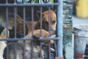 Ám ảnh những ánh mắt của đàn chó, mèo tuyệt vọng trong cũi sắt chờ ngày bị giết thịt ở Hà Nội