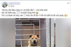 Clip chú chó hung dữ sắp bay ra khỏi cổng, chủ nhà vẫn điềm nhiên 'nó hiền lắm, không cắn đâu'