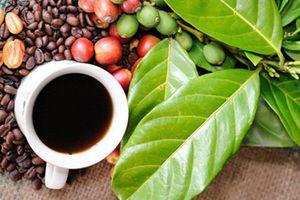 Giá cà phê hôm nay 14/9: Thị trường biến động khó lường