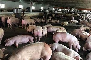 Tạm dừng nhập khẩu thịt lợn và sản phẩm thịt lợn từ Hungary và Ba Lan vào Việt Nam