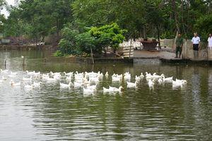 Hiệu quả thực hiện quy trình luân chuyển, điều động cán bộ ở huyện Hậu Lộc