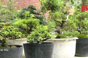 Cây cảnh tí hon giá ngàn USD khiến dân chơi bonsai 'phát sốt'