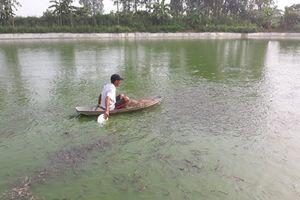 Nuôi cá chạch bùn lãi 150 triệu đồng/ha