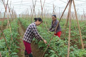 KHCN đóng góp trên 30% giá trị gia tăng của sản xuất nông nghiệp