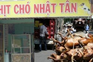 Dấu tích 'kinh đô thịt chó' Nhật Tân xưa ở Hà Nội