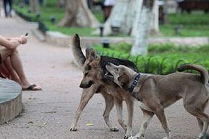 Hà Nội: Quản lý chặt việc nuôi, sử dụng thịt chó, mèo