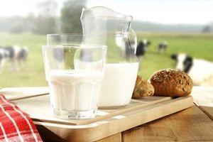 Vì sao một số trường hợp trẻ nhỏ uống sữa bò lại bị đau bụng?