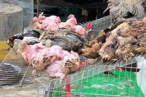 'Tàn sát' chim trời giữa chợ Miền Tây là hành vi vi phạm pháp luật?