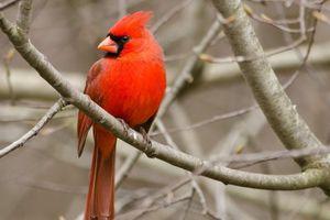 Khám phá loài chim đẹp lộng lẫy, mang lại may mắn ở Việt Nam