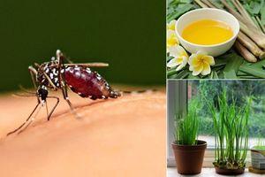 5 mẹo siêu đơn giản giúp 'đuổi sạch' muỗi ra khỏi ngôi nhà bạn