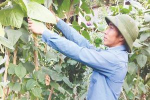 Thoát nghèo từ mô hình rau sạch