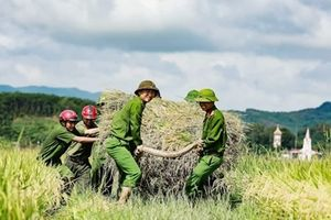 Công an giúp dân gặt lúa 'chạy' siêu bão Mangkhut