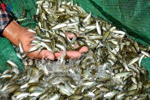Sản vật mùa nước nổi đồng bằng sông Cửu Long