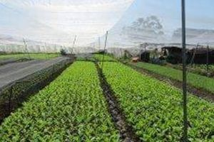 Thu hút doanh nghiệp tham gia dự án PPP nông nghiệp