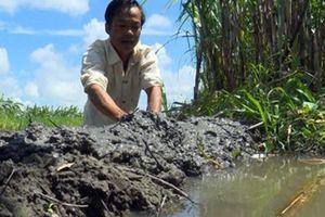 Hậu Giang: Chủ động chăm sóc vườn cây trái mùa nước nổi