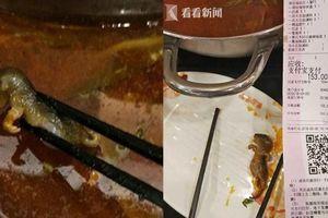 Chuột 'bơi' trong nồi lẩu, nhà hàng nổi tiếng mất hàng trăm triệu USD