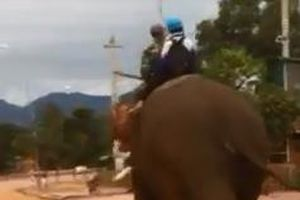 Học sinh ở Đắk Lắk cưỡi voi đi học gây sốt cộng đồng mạng