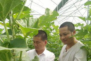 Hiệu quả kinh tế của mô hình trồng dưa lưới công nghệ cao