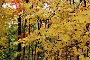 Khung cửa mùa thu