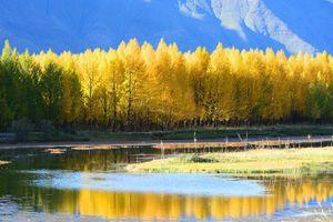 Ngẩn ngơ ngắm nhìn mùa thu đi qua Yarlung Zangbo- dòng sông Thánh Tây Tạng