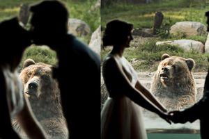 Biểu cảm hài hước của gấu xám khi chứng kiến cặp đôi kết hôn ở sở thú
