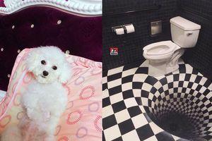 Bí mật gây cười đằng sau chú chó luôn ngậm miệng khi chụp ảnh và chiếc bồn cầu 'hụt chân'