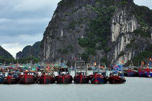 Cấm biển từ 17h00 ngày 16/9 từ Quảng Ninh đến Hải Phòng