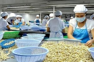 Bình Phước đề ra nhiều giải pháp phát triển kinh tế