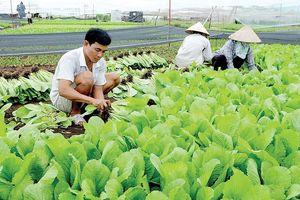 Ngành nông nghiệp thích ứng với biến đổi khí hậu