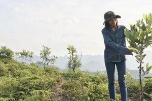 Giảm nghèo bền vững từ mô hình sinh kế ứng dụng công nghệ quản trị rừng