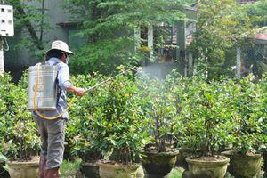 Thủ phủ mai cảnh An Nhơn đứng trước nỗi lo dùng thuốc BVTV tràn lan