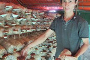 8X 'bỏ túi' 200 triệu đồng mỗi năm từ trồng nấm