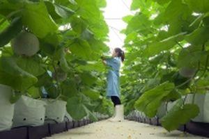 Tích tụ ruộng đất, sản xuất nông nghiệp công nghệ cao ở Hà Nam