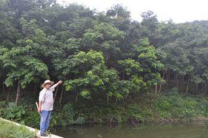 Ước mơ giữa rừng lim xanh