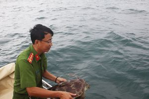 12 con rùa xanh quý hiếm ở Phú Quốc được thả về môi trường tự nhiên