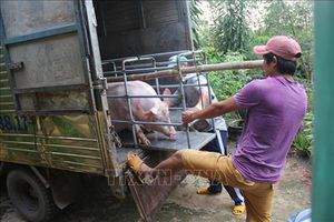 Chốt chặn 24/24 ở các đường mòn, lối mở để ngăn dịch tả lợn châu Phi