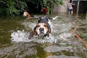 Cuộc giải cứu thú cưng trong bão Florence tại Mỹ gây sốt cộng đồng mạng