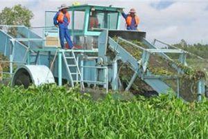 Sự thật bỏ 8tỷ diệt lục bình, chi 1,2 tỷ trồng mới