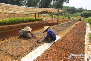 380 cơ sở sản xuất giống cây lâm nghiệp ở Tân Kỳ chưa được cấp phép