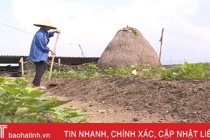 Đất nhiễm mặn, Kỳ Hưng gặp khó trong xây dựng vườn mẫu