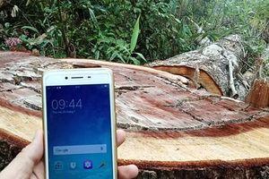 Khắc xuất, khắc nhập kiểm lâm: Các ban quản lý rừng lo bị 'chặt tay'