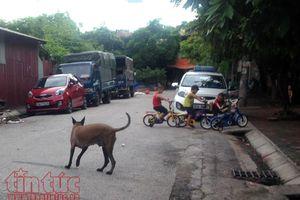Lo lây lan bệnh dại, Hà Nội tăng cường quản lý kinh doanh thịt chó, mèo